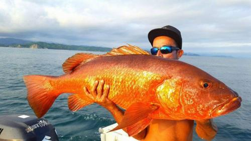 Chimpi, captain for Costa Rica Reef Adventures charter fishing tours, kisses a giant snapper after reeling it in off Costa Rica's Garza Beach.